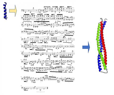 Using musical scores to code the structure and folding of proteins composed of amino acids, each of which vibrates with a unique sound