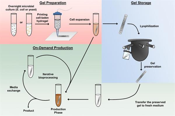 Hydrogel preparation, on-demand production, and hydrogel preservation