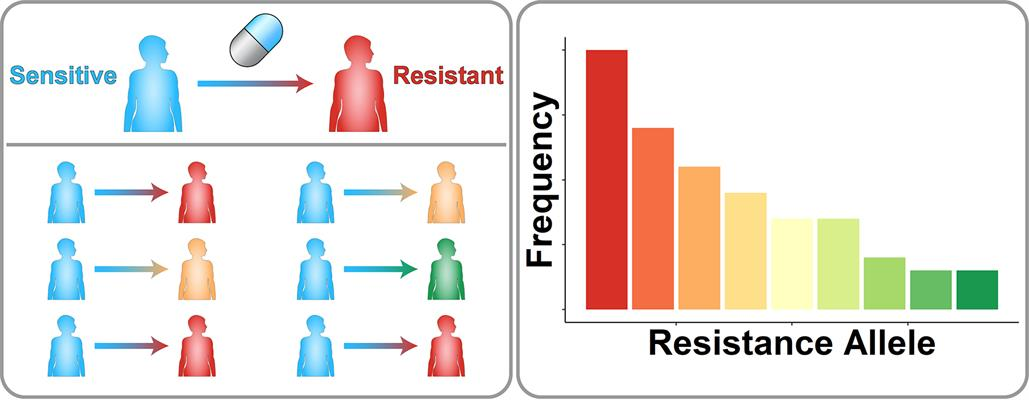 A schematic of drug resistance across a population of patients. Patients with initially sensitive disease are treated with a drug. Different genetic mutations cause different resistance mutations. Tallying up the number of patients associated with each resistance allele shows that some alleles are more common in the clinical population than others